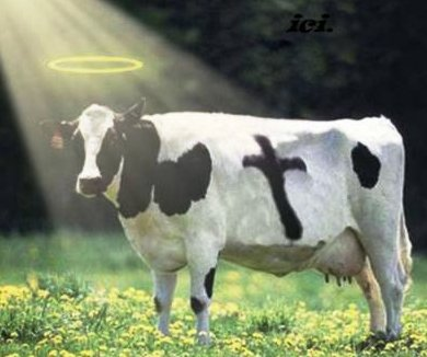 Holy Cow Image - Tallahassee Real Estate Blog's 400th Post
